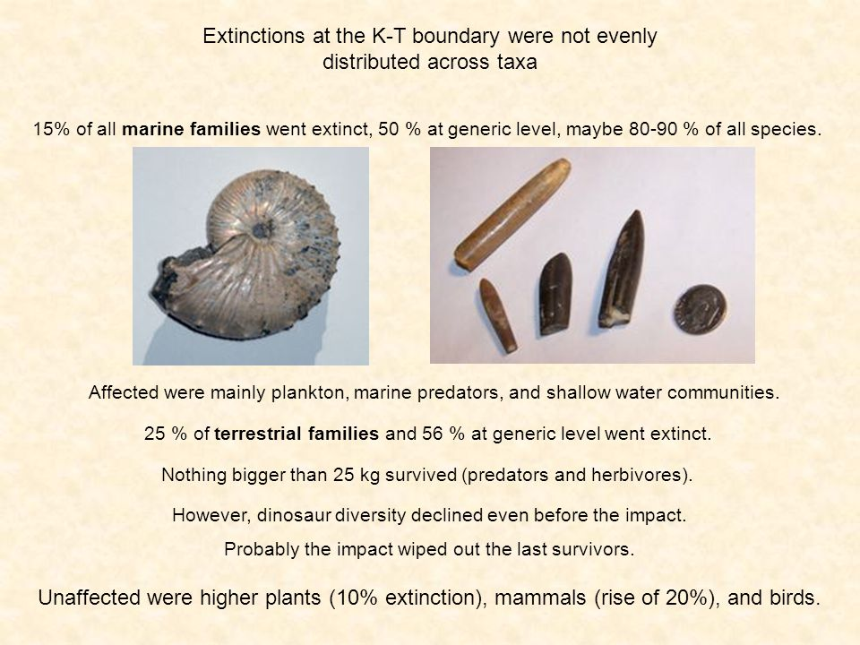 Extinctions at the K-T boundary were not evenly distributed across taxa 15% of all marine families went extinct, 50 % at generic level, maybe 80-90 % of all species.