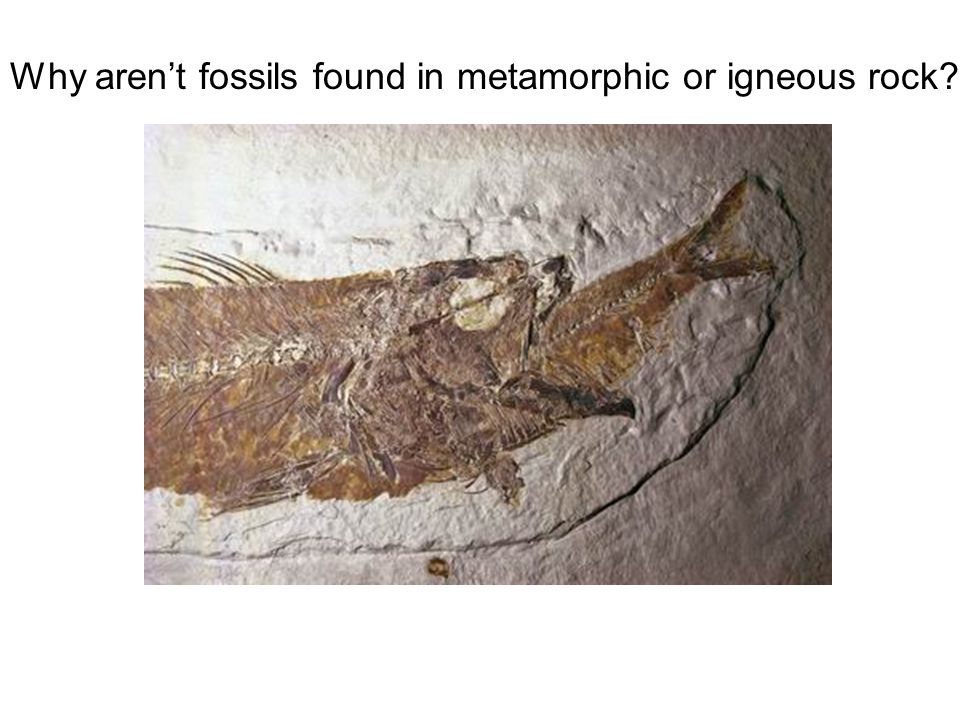 Why aren't fossils found in metamorphic or igneous rock