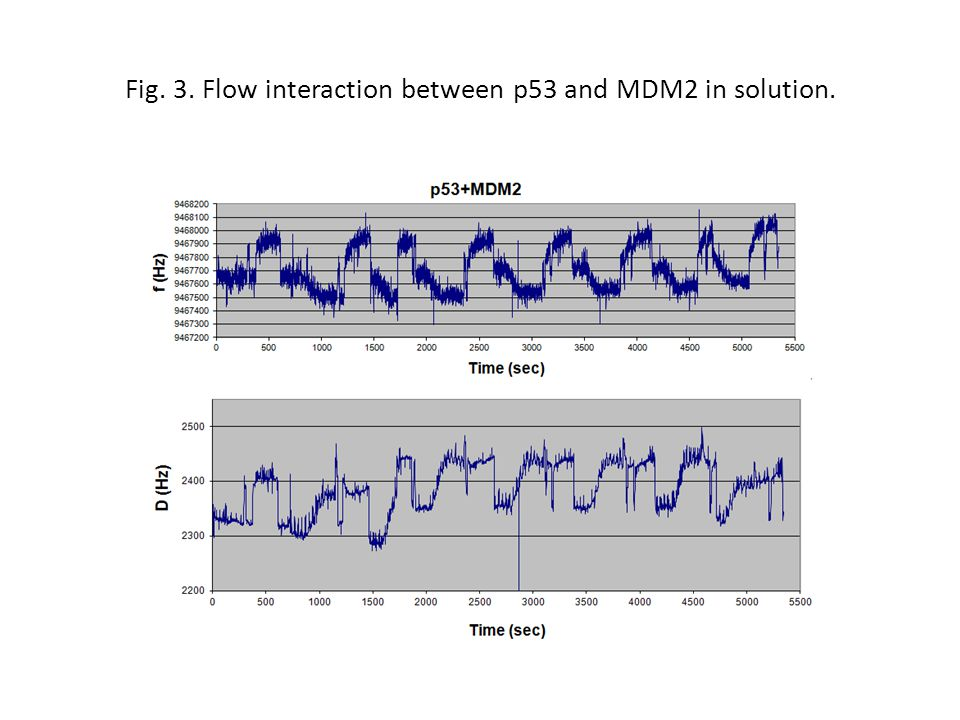 Fig. 3. Flow interaction between p53 and MDM2 in solution.