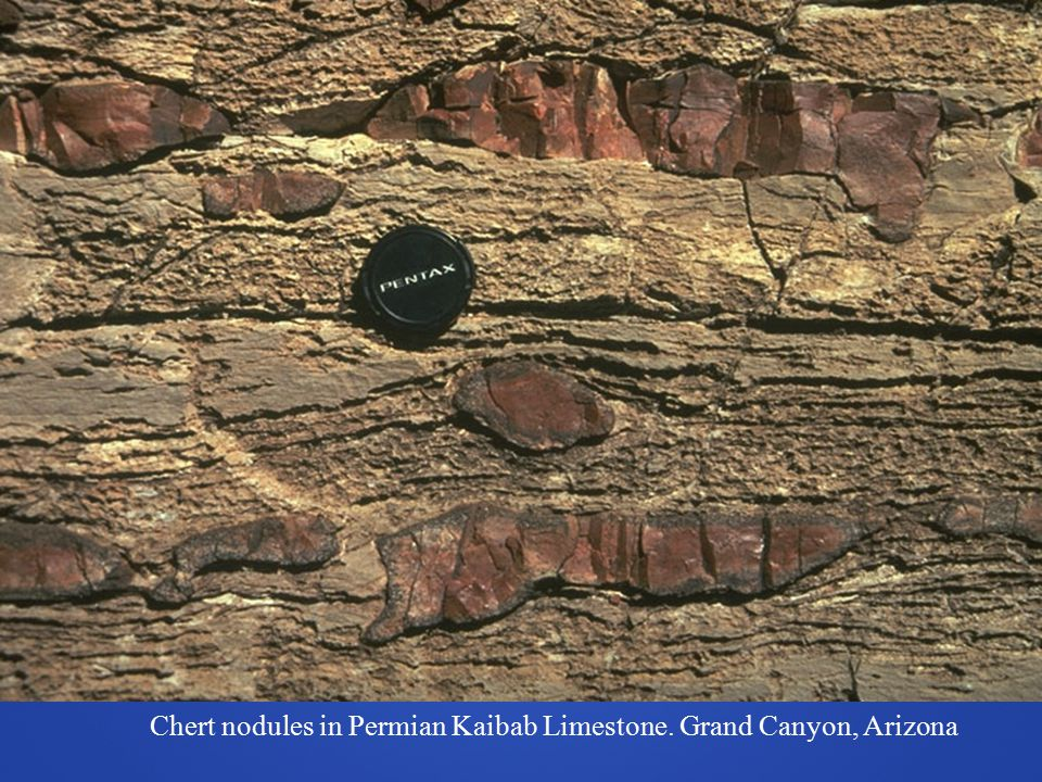 Chert nodules in Permian Kaibab Limestone. Grand Canyon, Arizona