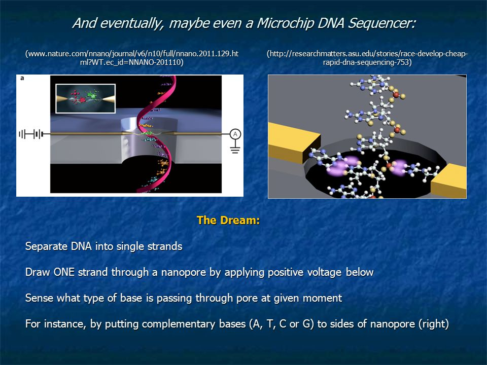 And eventually, maybe even a Microchip DNA Sequencer: The Dream: Separate DNA into single strands Draw ONE strand through a nanopore by applying positive voltage below Sense what type of base is passing through pore at given moment For instance, by putting complementary bases (A, T, C or G) to sides of nanopore (right) (www.nature.com/nnano/journal/v6/n10/full/nnano.2011.129.ht ml?WT.ec_id=NNANO-201110) (http://researchmatters.asu.edu/stories/race-develop-cheap- rapid-dna-sequencing-753)