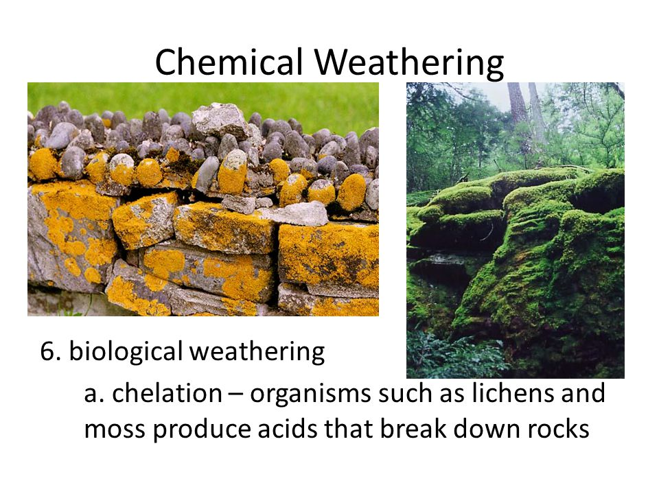 Chemical Weathering 6. biological weathering a. chelation – organisms such as lichens and moss produce acids that break down rocks