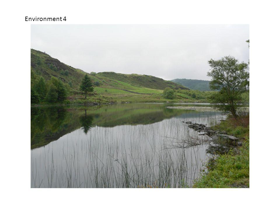 Environment 4