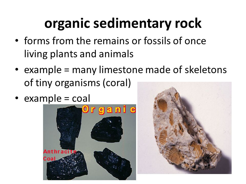 organic sedimentary rock forms from the remains or fossils of once living plants and animals example = many limestone made of skeletons of tiny organi