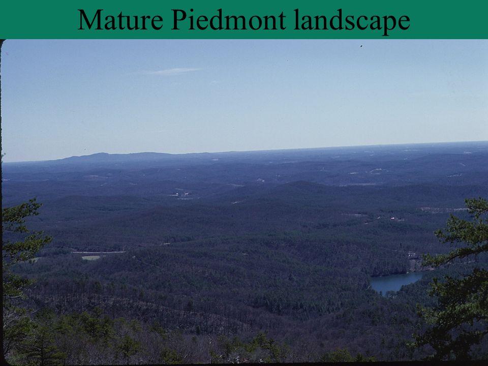 Mature Piedmont landscape