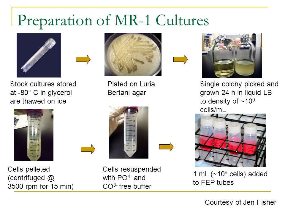 Preparation of MR-1 Cultures Stock cultures stored at -80° C in glycerol are thawed on ice Plated on Luria Bertani agar Single colony picked and grown 24 h in liquid LB to density of ~10 9 cells/mL Cells pelleted (centrifuged @ 3500 rpm for 15 min) Cells resuspended with PO 4- and CO 3- free buffer 1 mL (~10 9 cells) added to FEP tubes Courtesy of Jen Fisher