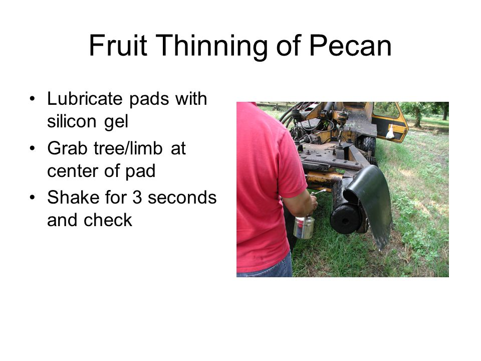 Fruit Thinning of Pecan Lubricate pads with silicon gel Grab tree/limb at center of pad Shake for 3 seconds and check