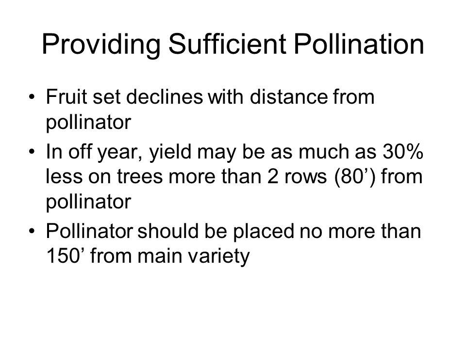 Providing Sufficient Pollination Fruit set declines with distance from pollinator In off year, yield may be as much as 30% less on trees more than 2 r