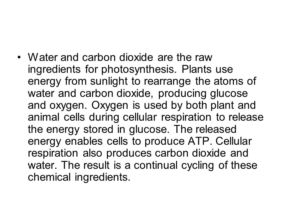 Water and carbon dioxide are the raw ingredients for photosynthesis.