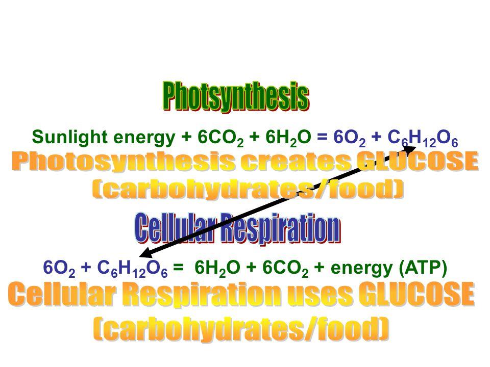 6O 2 + C 6 H 12 O 6 = 6H 2 O + 6CO 2 + energy (ATP) Sunlight energy + 6CO 2 + 6H 2 O = 6O 2 + C 6 H 12 O 6