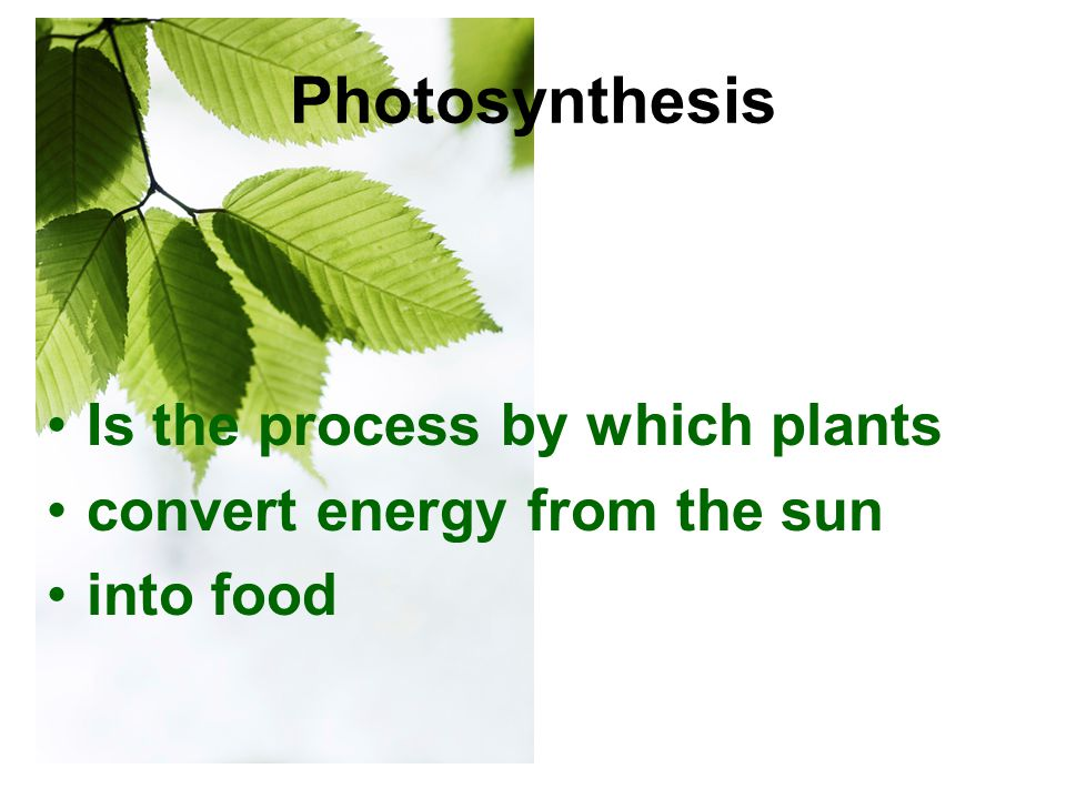 In Photosynthesis The plant's chlorophyll takes energy from the sun combines it with carbon dioxide from the atmosphere and water from the plant To create glucose (carbohydrates/food) and oxygen