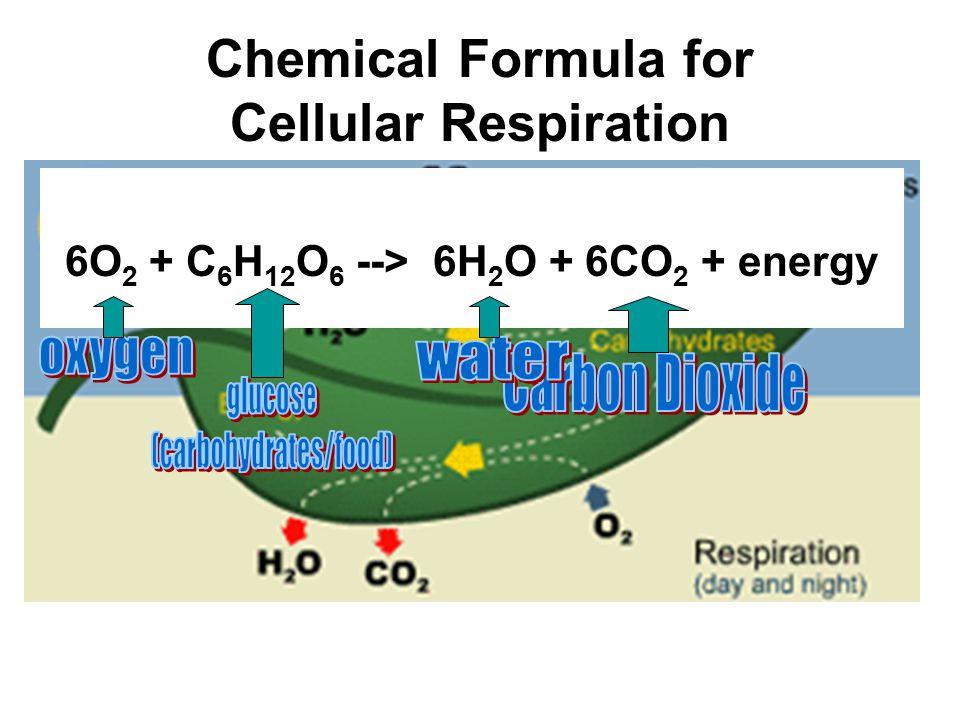 Chemical Formula for Cellular Respiration 6O 2 + C 6 H 12 O 6 --> 6H 2 O + 6CO 2 + energy
