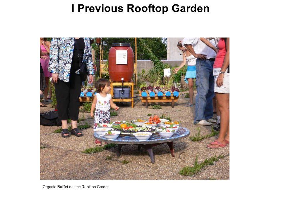 Organic Buffet on the Rooftop Garden I Previous Rooftop Garden