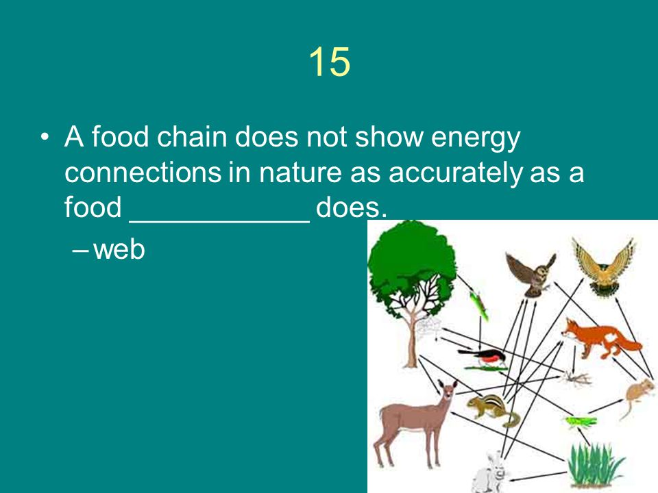 15 A food chain does not show energy connections in nature as accurately as a food ___________ does. –web
