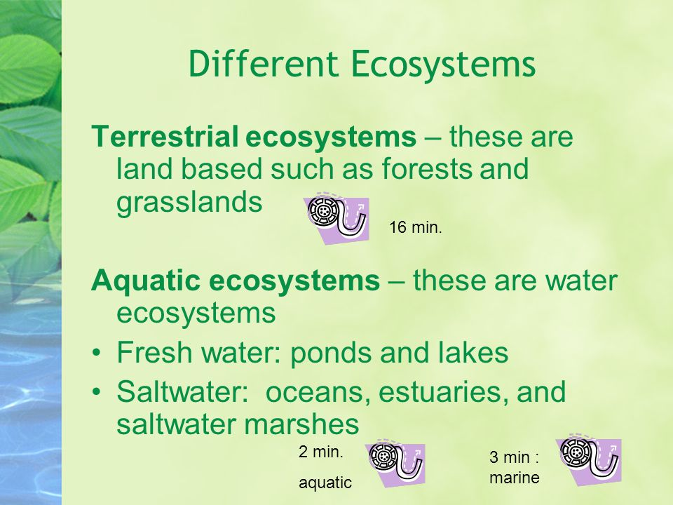 Different Ecosystems Terrestrial ecosystems – these are land based such as forests and grasslands Aquatic ecosystems – these are water ecosystems Fresh water: ponds and lakes Saltwater: oceans, estuaries, and saltwater marshes 16 min.