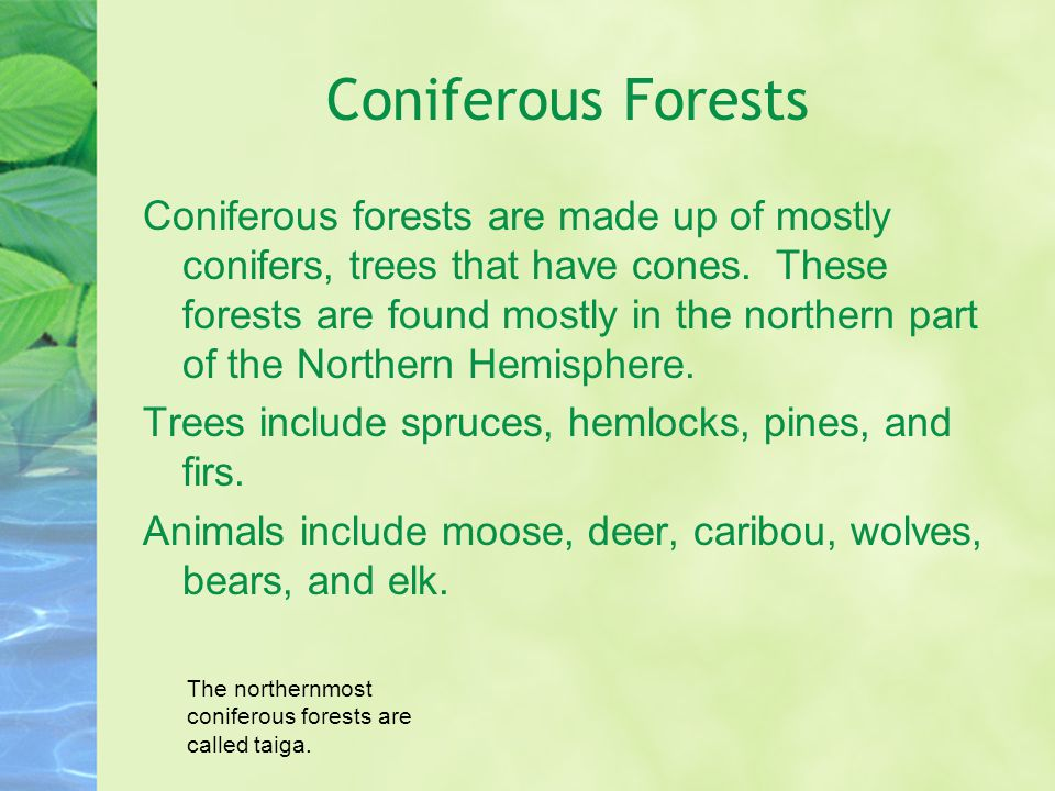 Coniferous Forests Coniferous forests are made up of mostly conifers, trees that have cones.