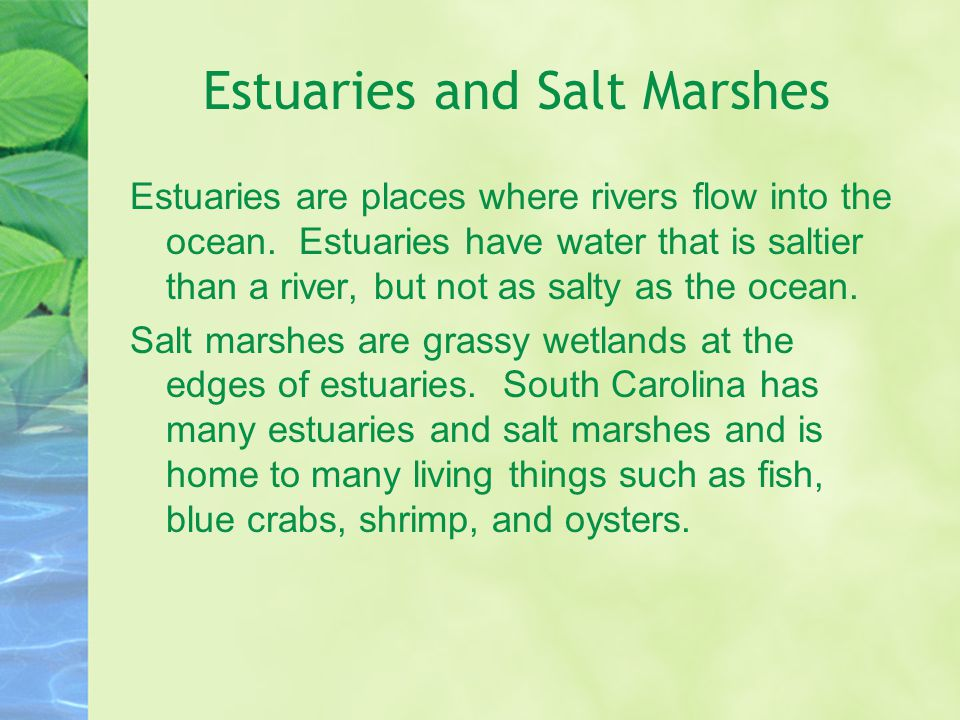 Estuaries and Salt Marshes Estuaries are places where rivers flow into the ocean. Estuaries have water that is saltier than a river, but not as salty