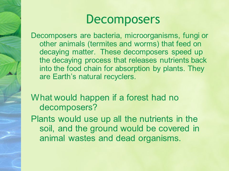 Decomposers Decomposers are bacteria, microorganisms, fungi or other animals (termites and worms) that feed on decaying matter. These decomposers spee