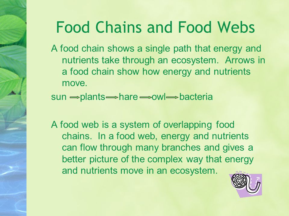 Food Chains and Food Webs A food chain shows a single path that energy and nutrients take through an ecosystem.