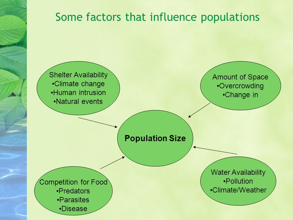 Some factors that influence populations Population Size Shelter Availability Climate change Human intrusion Natural events Amount of Space Overcrowding Change in Competition for Food Predators Parasites Disease Water Availability Pollution Climate/Weather