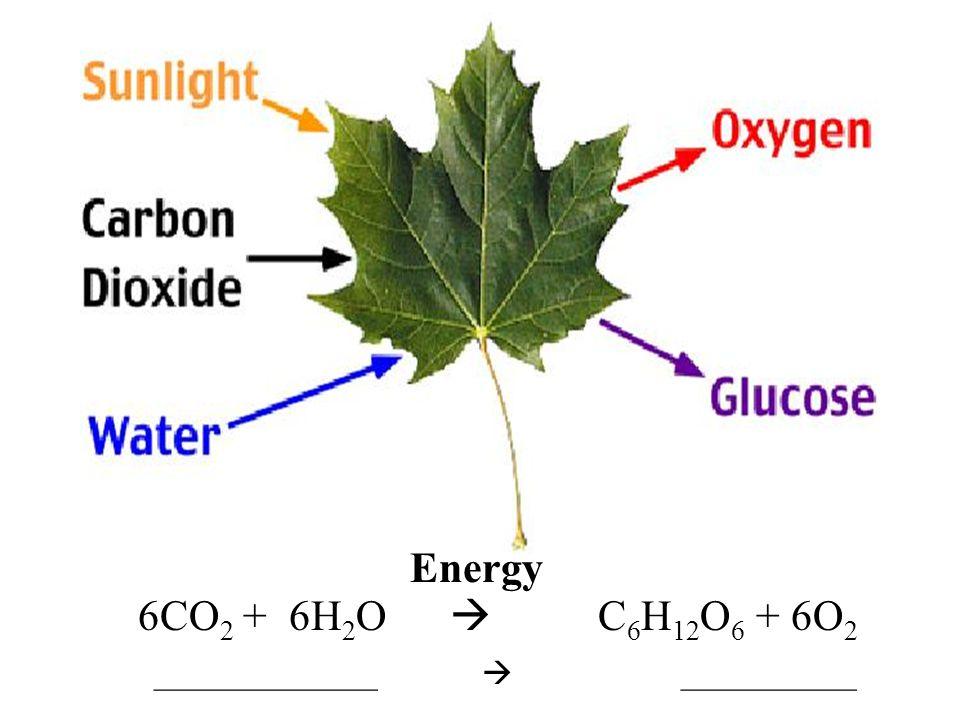 6CO 2 + 6H 2 O  C 6 H 12 O 6 + 6O 2 ______________  ___________ Energy