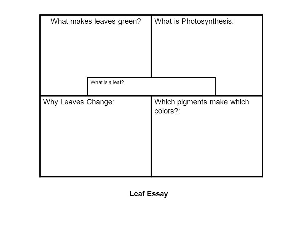 What makes leaves green?What is Photosynthesis: Why Leaves Change:Which pigments make which colors?: What is a leaf.