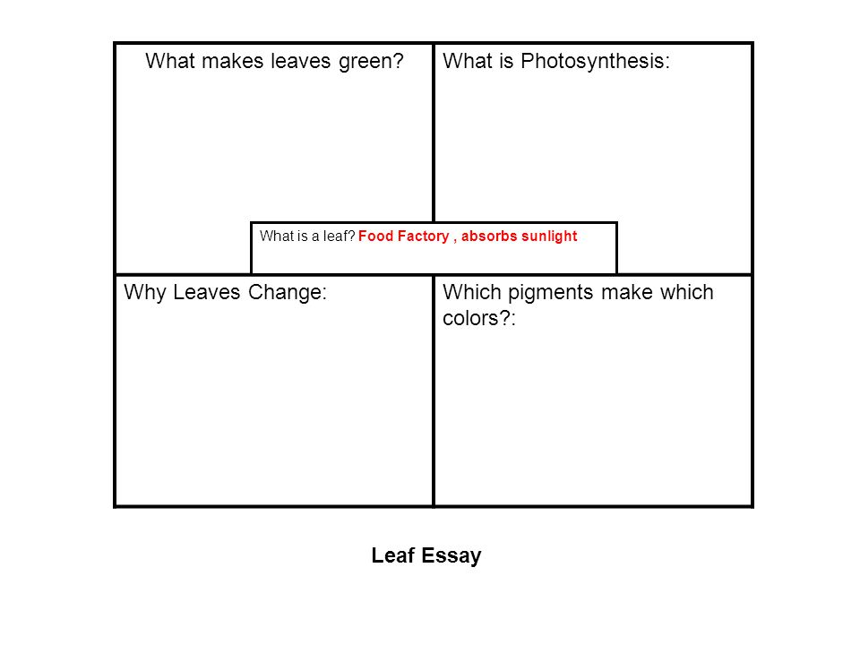 What makes leaves green What is Photosynthesis: Why Leaves Change:Which pigments make which colors : What is a leaf.