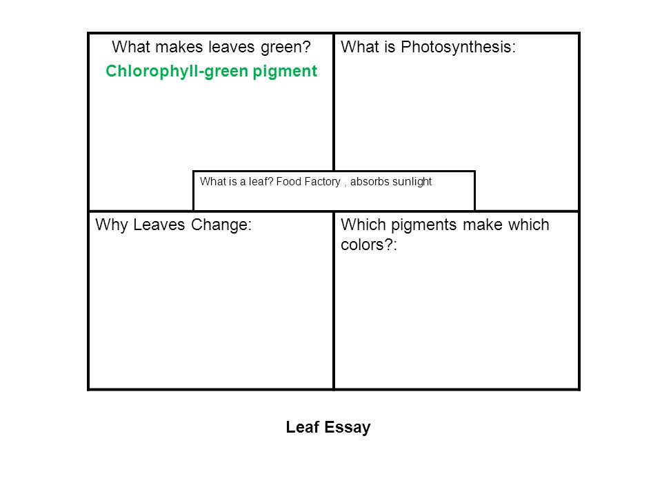 What makes leaves green? Chlorophyll-green pigment What is Photosynthesis: Why Leaves Change:Which pigments make which colors?: What is a leaf? Food F