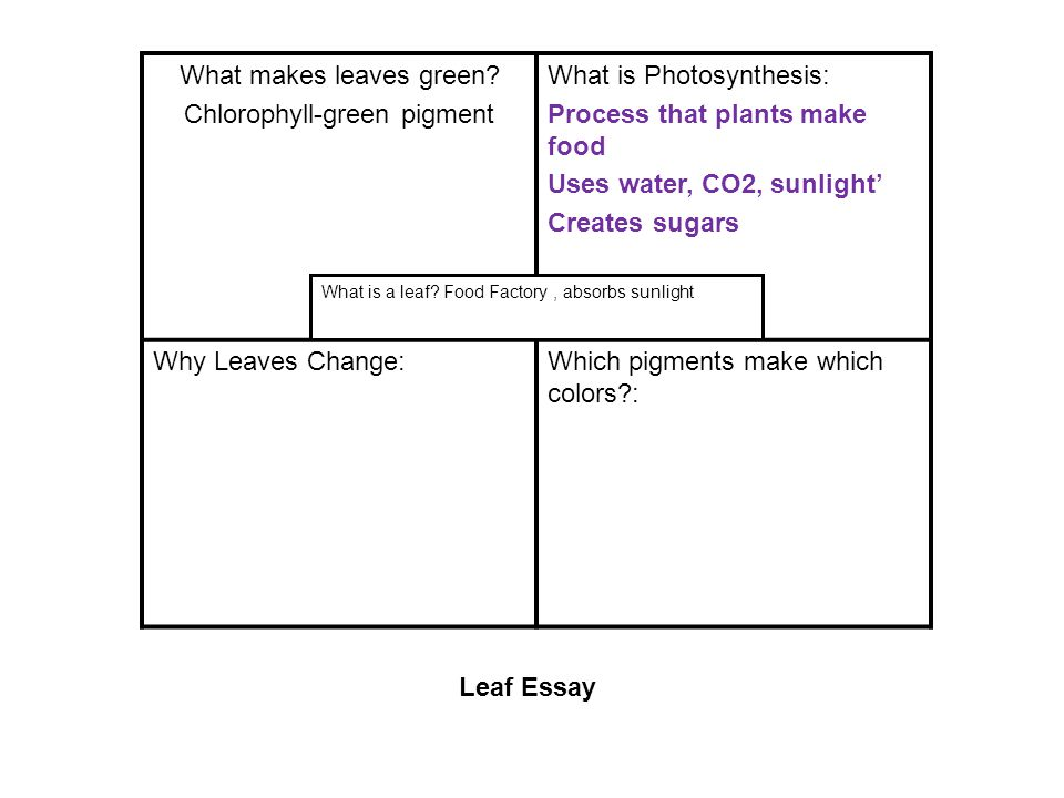 What makes leaves green? Chlorophyll-green pigment What is Photosynthesis: Process that plants make food Uses water, CO2, sunlight' Creates sugars Why