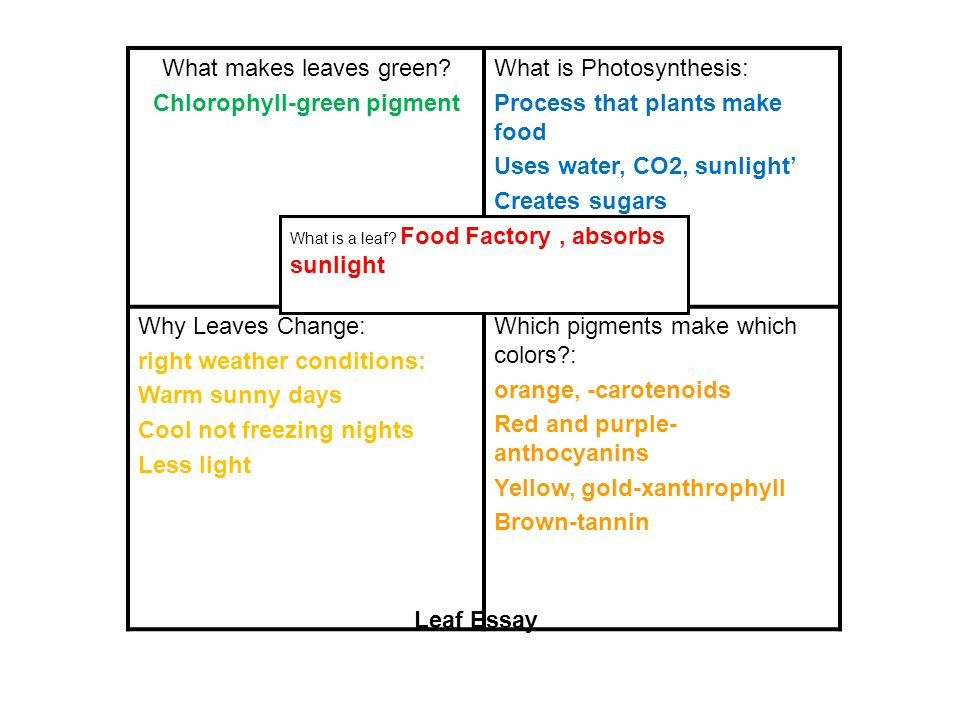 What makes leaves green.