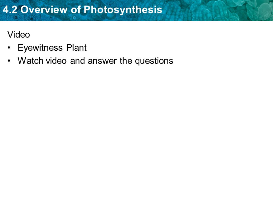 4.2 Overview of Photosynthesis Video Eyewitness Plant Watch video and answer the questions