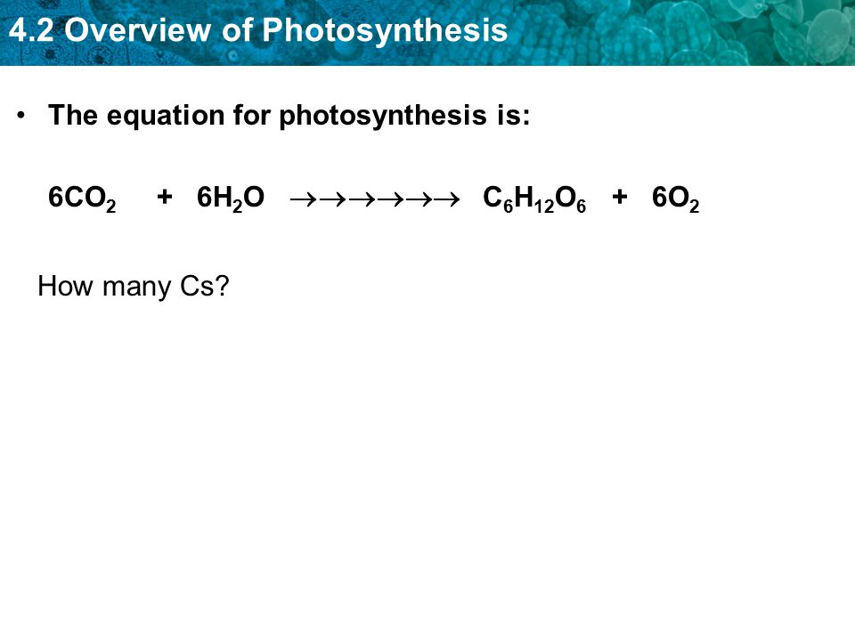 4.2 Overview of Photosynthesis The equation for photosynthesis is: 6CO 2 + 6H 2 O  C 6 H 12 O 6 + 6O 2 How many Cs?