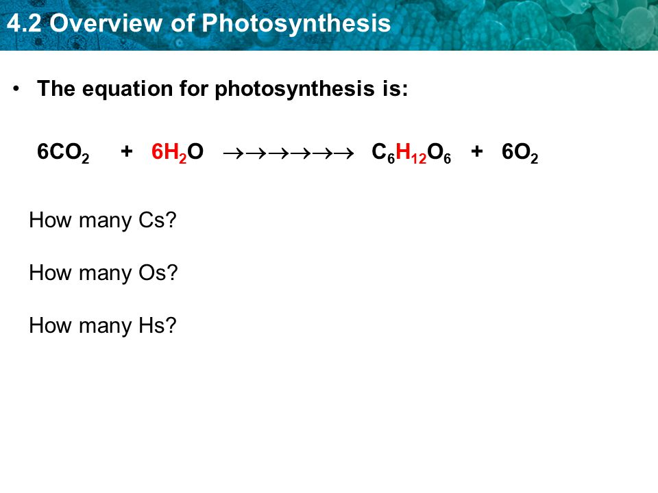 4.2 Overview of Photosynthesis The equation for photosynthesis is: 6CO 2 + 6H 2 O  C 6 H 12 O 6 + 6O 2 How many Cs? How many Os? How many Hs?