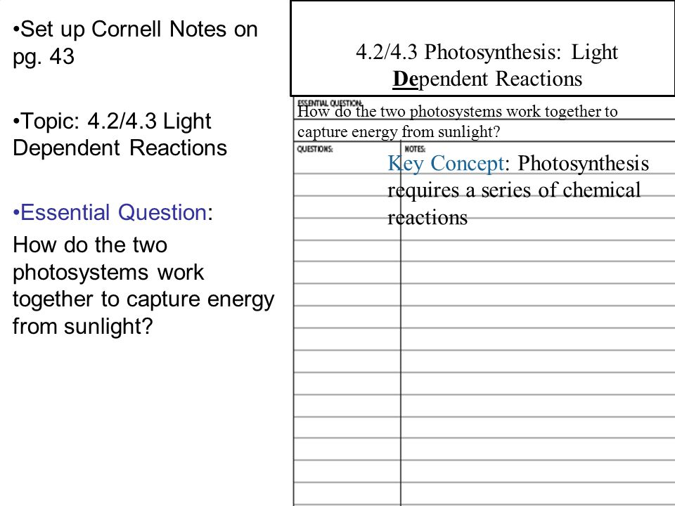 4.2 Overview of Photosynthesis Set up Cornell Notes on pg. 43 Topic: 4.2/4.3 Light Dependent Reactions Essential Question: How do the two photosystems