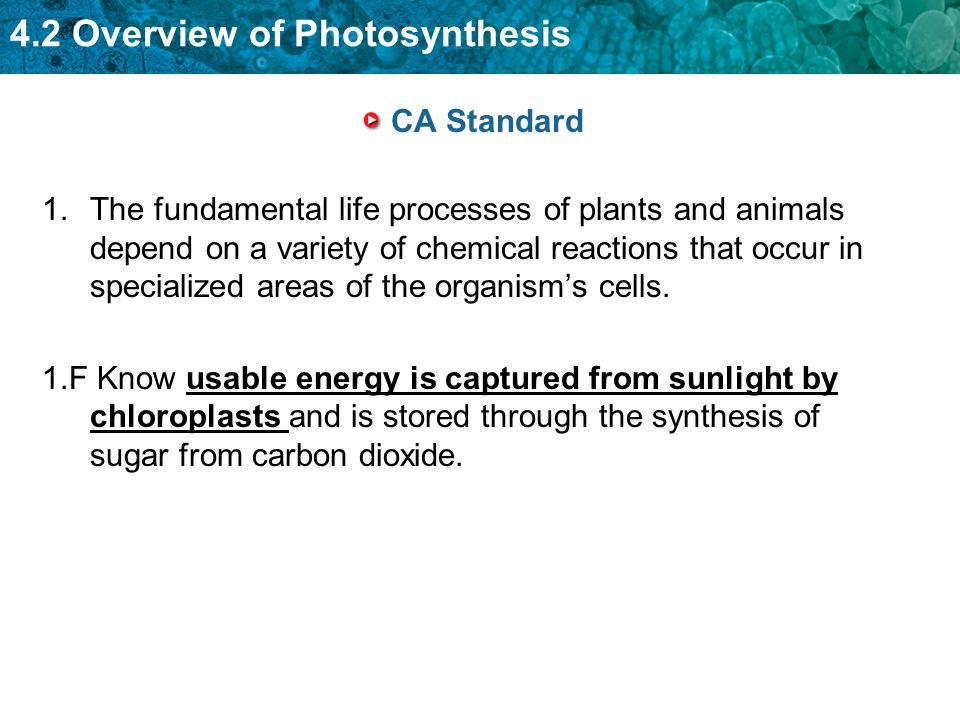 4.2 Overview of Photosynthesis CA Standard 1.The fundamental life processes of plants and animals depend on a variety of chemical reactions that occur