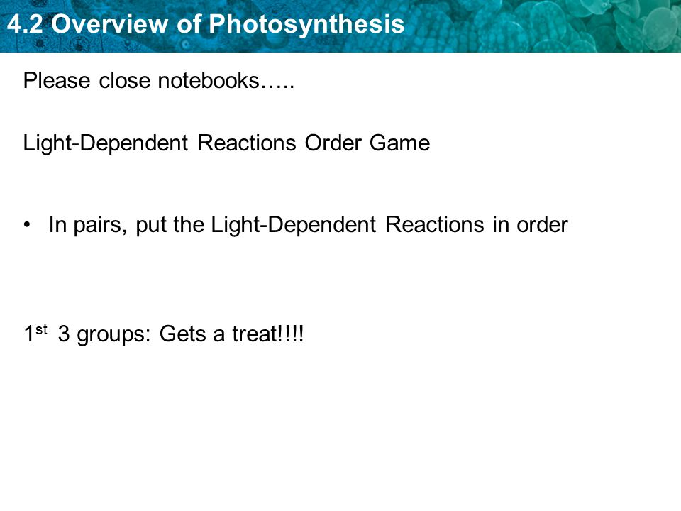 4.2 Overview of Photosynthesis Light-Dependent Reactions Order Game In pairs, put the Light-Dependent Reactions in order 1 st 3 groups: Gets a treat!!