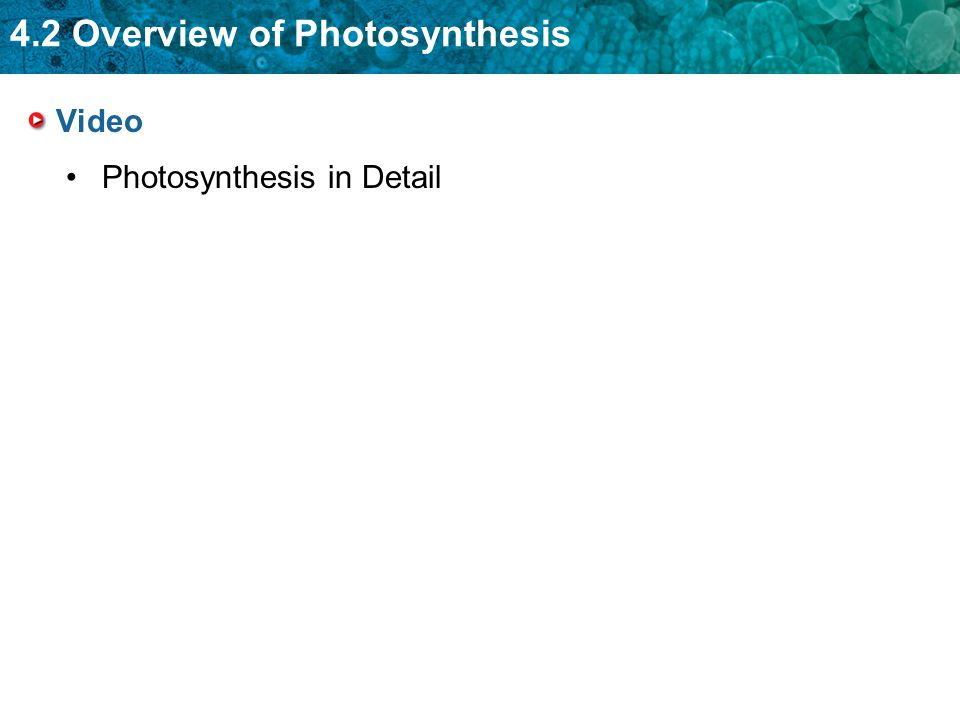 4.2 Overview of Photosynthesis Video Photosynthesis in Detail