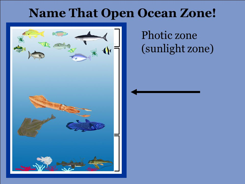 Photic zone (sunlight zone) Name That Open Ocean Zone!