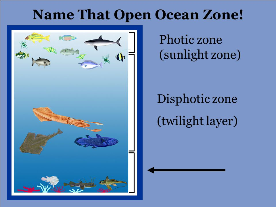 Photic zone (sunlight zone) Disphotic zone (twilight layer) Name That Open Ocean Zone!