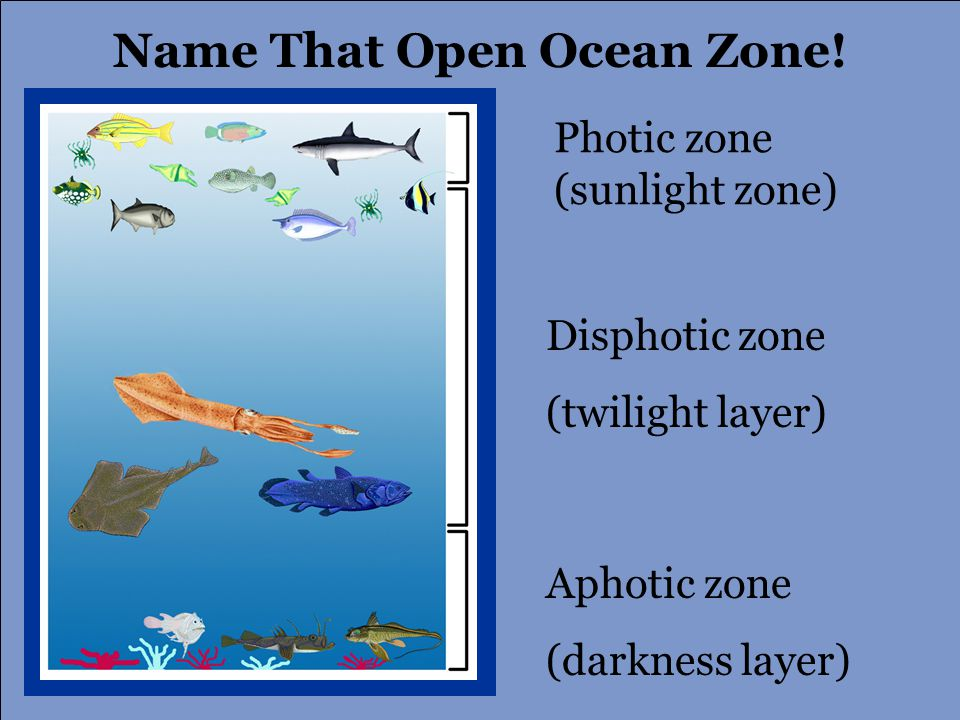 Aphotic zone (darkness layer) Name That Open Ocean Zone.