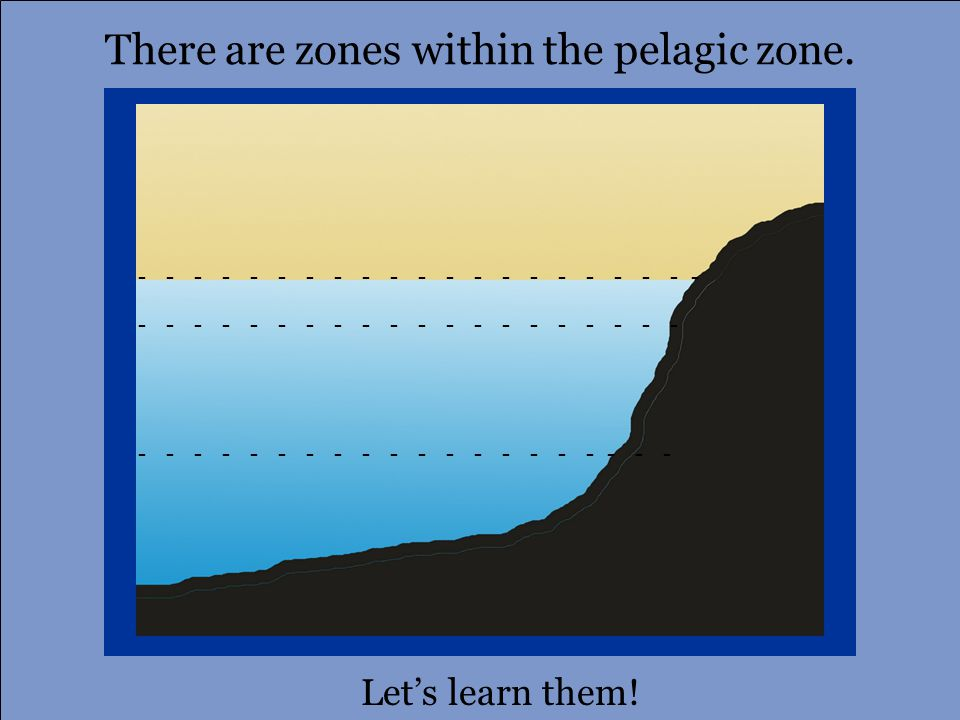 Name That Open Ocean Zone! Nice work! Aphotic zone Photic zone Disphotic zone