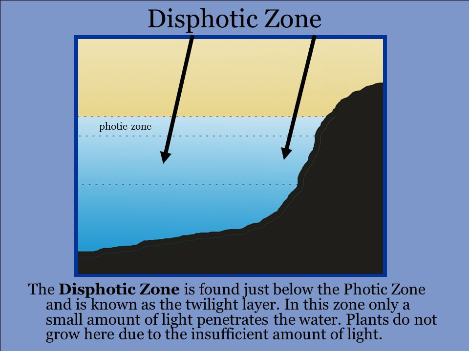 photic zone disphotic zone Aphotic Zone The darkness layer or Aphotic Zone is entirely dark meaning there is no light.