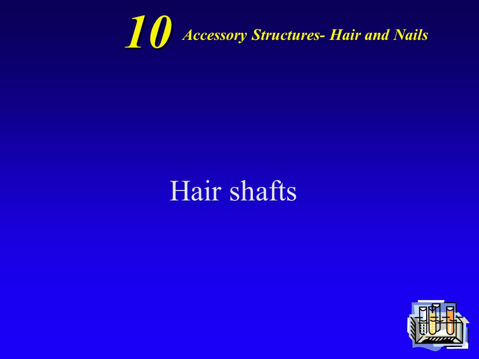 10 Accessory Structures- Hair and Nails Dead, keratinized cells make up…