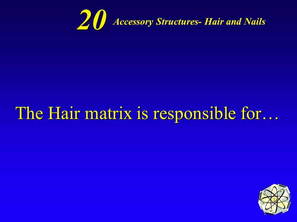 Hair shafts 10 Accessory Structures- Hair and Nails