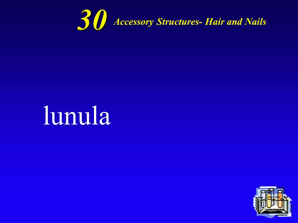 30 The pale, crescent part of the nail is called the Accessory Structures- Hair and Nails
