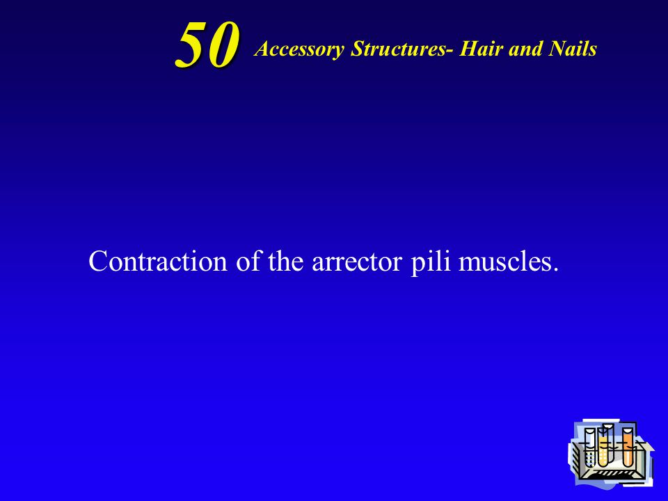 50 What causes the formation of goosebumps Accessory Structures- Hair and Nails