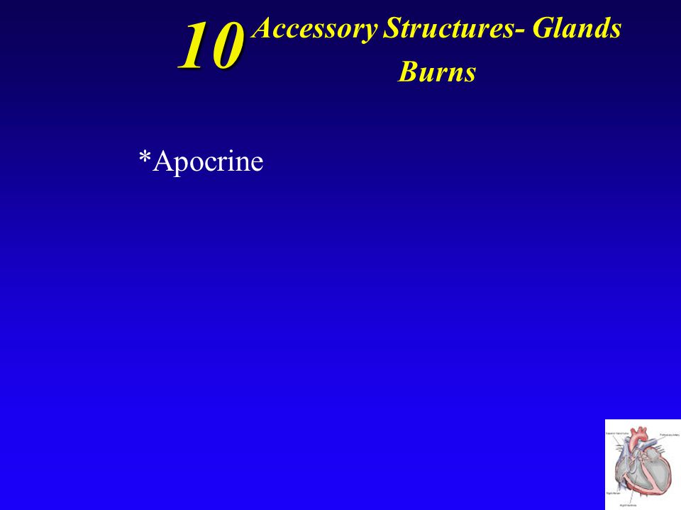 10 Accessory Structures- Glands Burns Glands that produce a sticky, cloudy discharge.