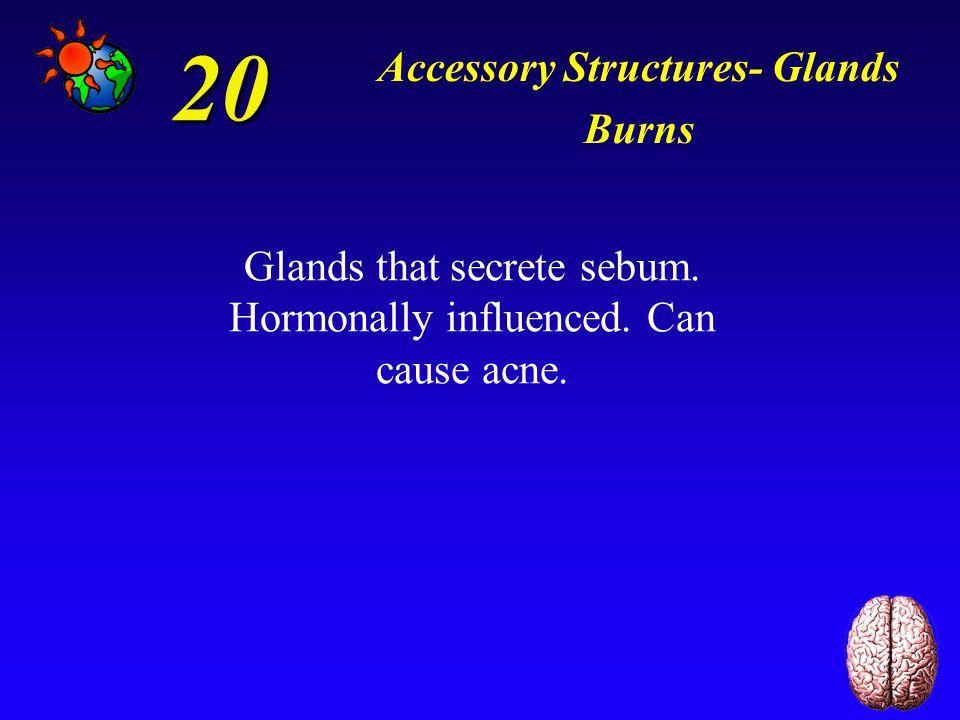 10 Accessory Structures- Glands Burns *Apocrine