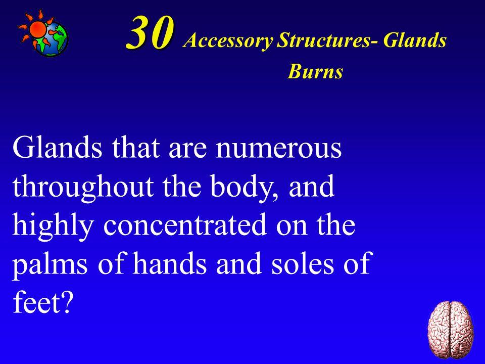 20 Accessory Structures- Glands Burns Sebaceous glands