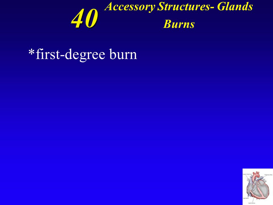 40 Accessory Structures- Glands Burns *A burn that destroys the superficial cells of the epidermis